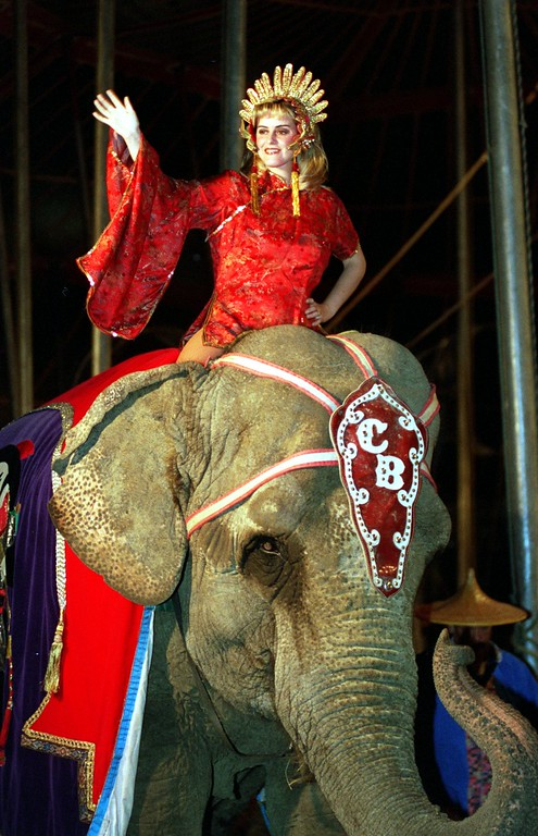. A parade of elephants make their way through the circus tent during the Carson & Barnes circus in Highland.