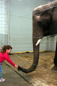 Royal Hanneford Circus-elephant