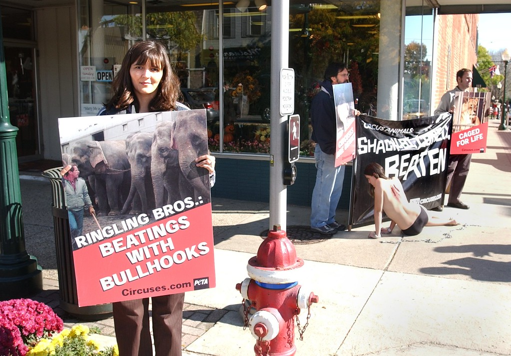 . Italia Millan of Auburn Hills stands at the corner or Main and 4th Streets in Rochester, protesting Ringling Bros. and Barnum & Bailey Circus along with PETA.  The protest included a scantly clad and chained Amelia Bruce of Northfolk, VA.  Bruce is with SMART, Southeastern Michigan Animal Rights Team. The protest was at Main and 4th Streets.