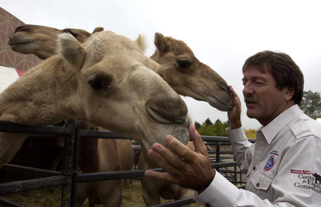 . John Kirtland, Executive Director of Animal Stewardship for Feld Entertainment, gets chummy with three camels in their outdoor pen in front of the Palace of Auburn Hills on October 3, 2002  where the animals are performing daily in the Ringling Bros. and Barnum & Bailey Circus.  The circus has recently come under fire from local animal rights groups who protest the use of animals in circuses and zoos. (PHOTO BY BRANDY BAKER/THE OAKLAND PRESS).