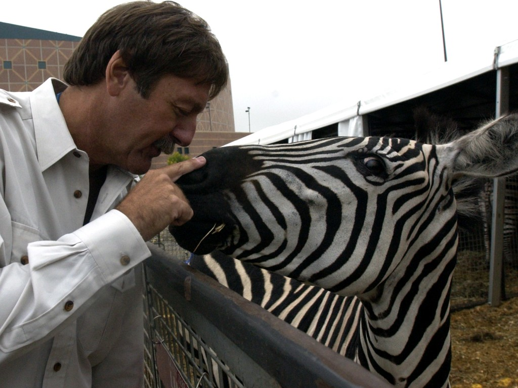 . John Kirtland, Executive Director of Animal Stewardship for Feld Entertainment, nuzzles the nose of a Zebra in its outdoor pen in front of the Palace of Auburn Hills on October 3, 2002  where it performs daily in the Ringling Bros. and Barnum & Bailey Circus.  The circus has recently come under fire from local animal rights groups who protest the use of animals in circuses and zoos. (PHOTO BY BRANDY BAKER/THE OAKLAND PRESS).