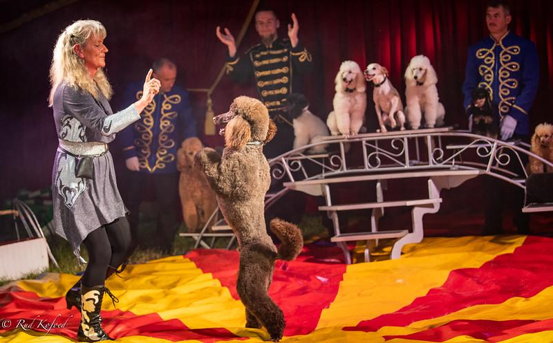 Cirkusdirektør Marianne Deleuran har findyrket sit hundenummer gennem mange år