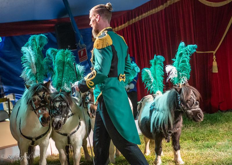 Ponyerne er populære dyr i manegen, forståeligt nok...