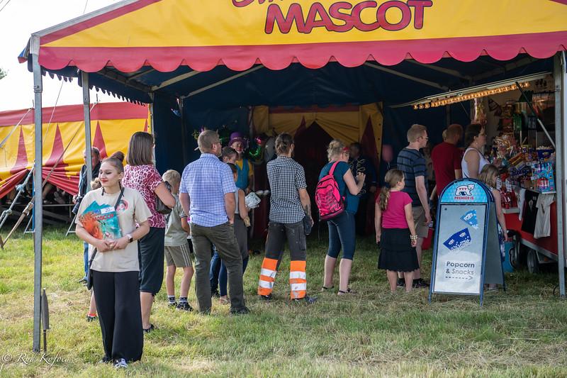 Køer i cirkus er altid populært...