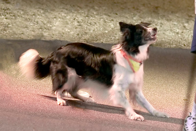 Cirque du Canine