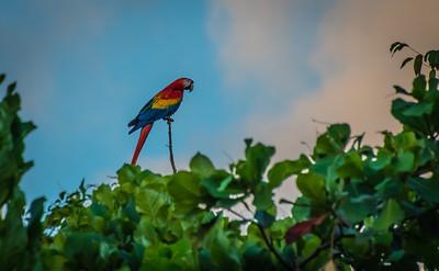 CR Skies & Wildlife