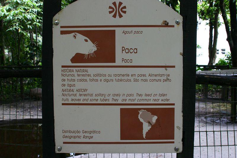 Manaus030