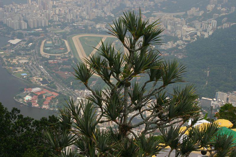 Rio145