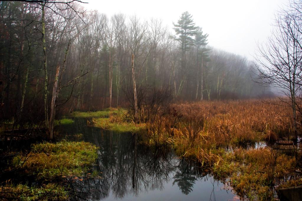Beaver Brook in Fog