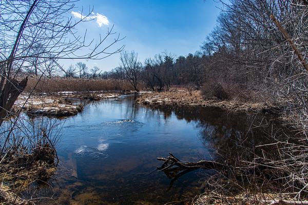 Springtime on Stony Brook II