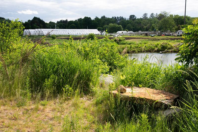 Sunny Meadow Pond Overlook