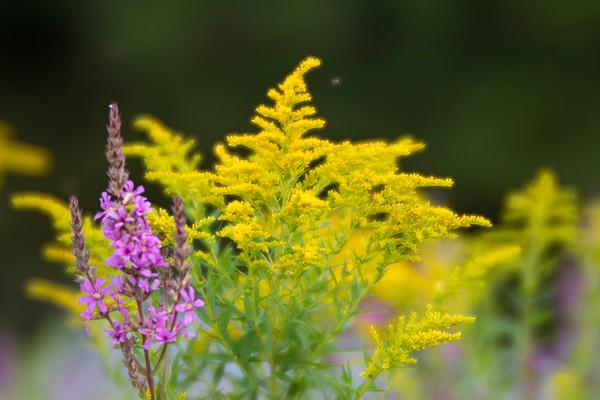 Weeds Among Us