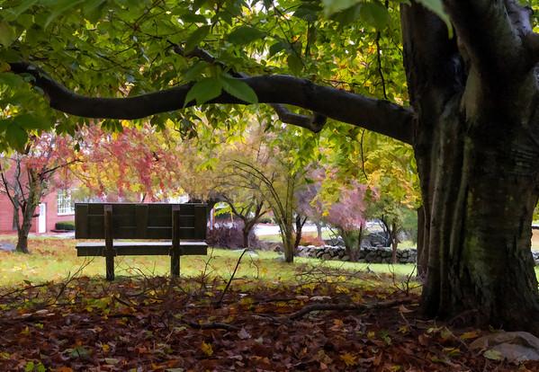 The Bench at Bartlett Park