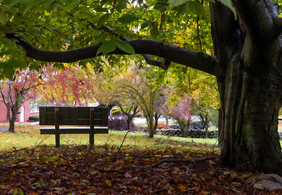 The Bench at Bartlett Park
