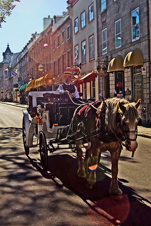 Horse and Buggy Tour