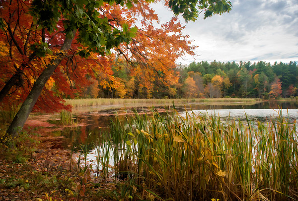 Artist's Rendition - Flint Pond in Fall
