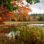Artist's Rendition - Flint Pond in Fall