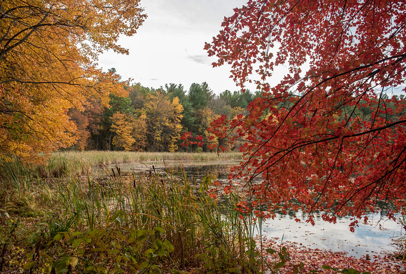 Flint Pond, Fall