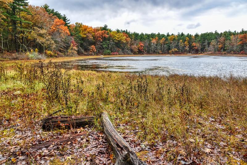 Grassy Pond - Fall