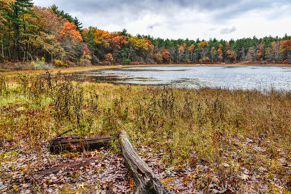 Grassy Pond - Fall