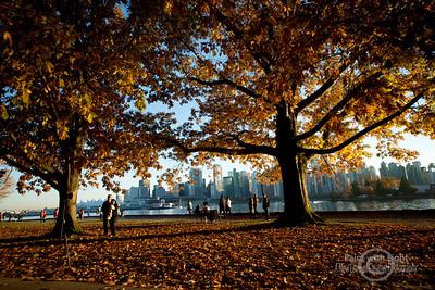DSC_5080 fall stanley Park