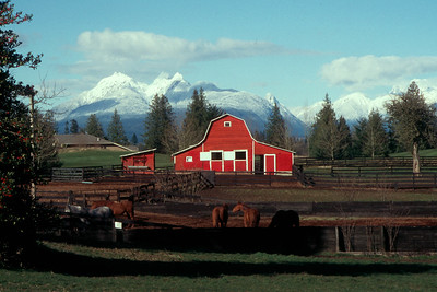 Red Barn with Horses and Snow Covered Golden Ears Mountains