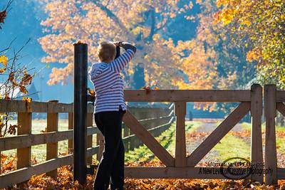 DSC_5063 fall colours