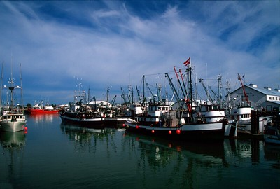 Fishing Boats sitting idle at Steveston Harbour, Richmond, B.C., Canada