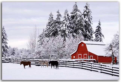 Red Barn with 3 Horses. A fixture every local knows about. Corner of Telegraph trail and Glover Road in Fort Langley