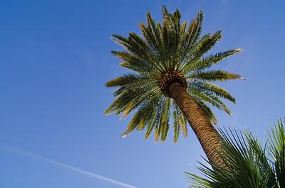 Vegas Palm