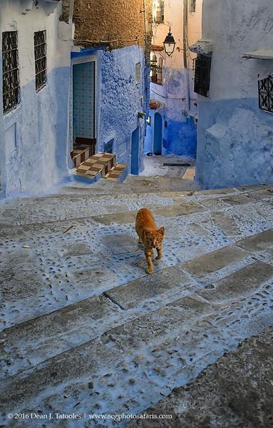 Chaouen Cat