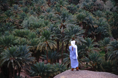 Overlooking the Lush Palm Groves of Draa Valley