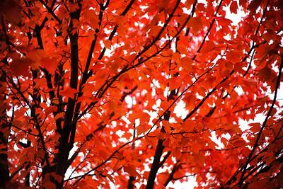 The Reds of Fall - Seattle, WA