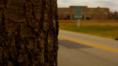 A macro of a tree looking out towards Centennial Campus.