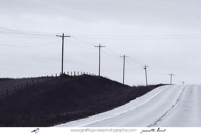 Lyrical Landscapes, Iowa; backroads; Jeanette Lamb; Graffiti Goose Photography