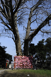 A tree devoted to prayers for love and happy relationships.