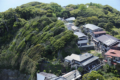 "The ""Green Wave"": the effect of decades of strong winds upon the island's trees. The houses line the path to the one of Enoshima's three major Shinto shrines."