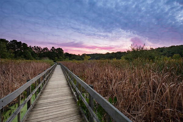Alder Pond Cattail Marsh at Sunrise