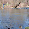 The little lehigh river is a popular fishing area, we sat by these ducks for a little while watching the fly fisherman.