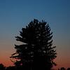 Sunset in Trexler Park