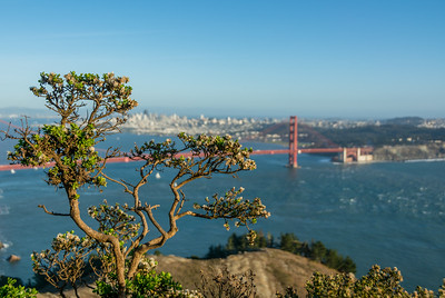 Greenery In The Marin Headlands