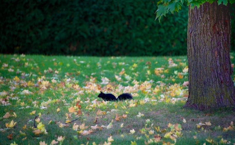 Fall scene, Brampton