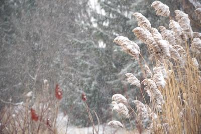 Braving the snow