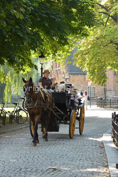 A horse and carriage that guide you through the streets of Bruges (Brugge), Belgium.