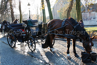 A horse and carriage that guide you through Bruges (Brugge), Belgium, on the Wijngaardplein. On this square the horses eat, drink and rest for awhile.