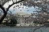 Jefferson Memorial,Cherry Blossom Festival