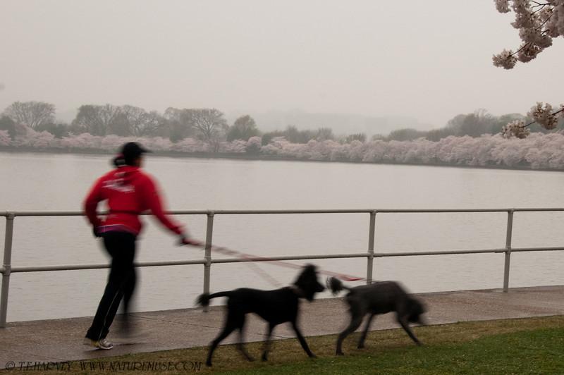 A Run in the Rain