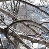 02-23-08 Dayton 03 icy trees