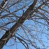 02-23-08 Dayton 05 icy trees