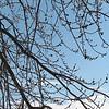 02-23-08 Dayton 01 icy trees